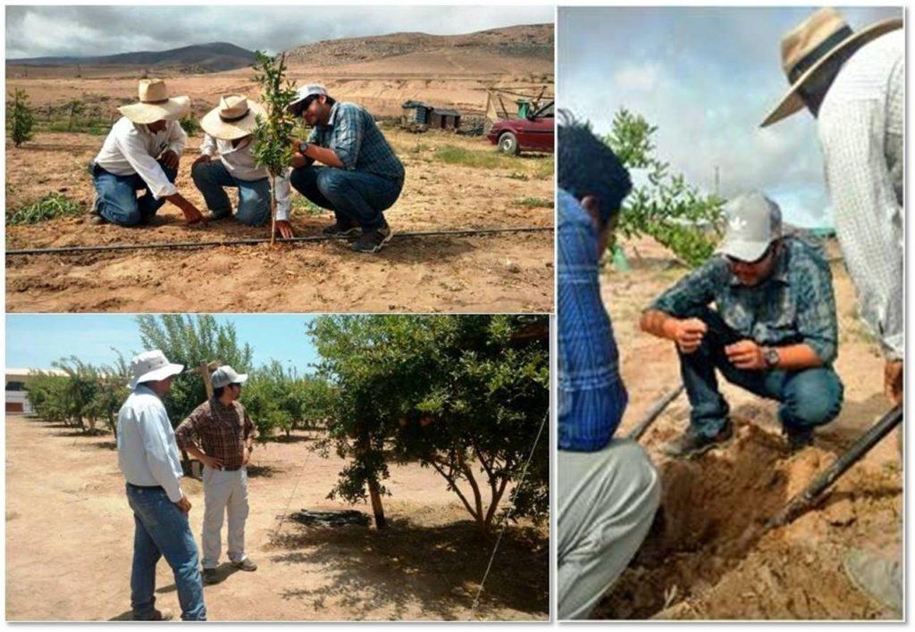 fertirrigación agrícola