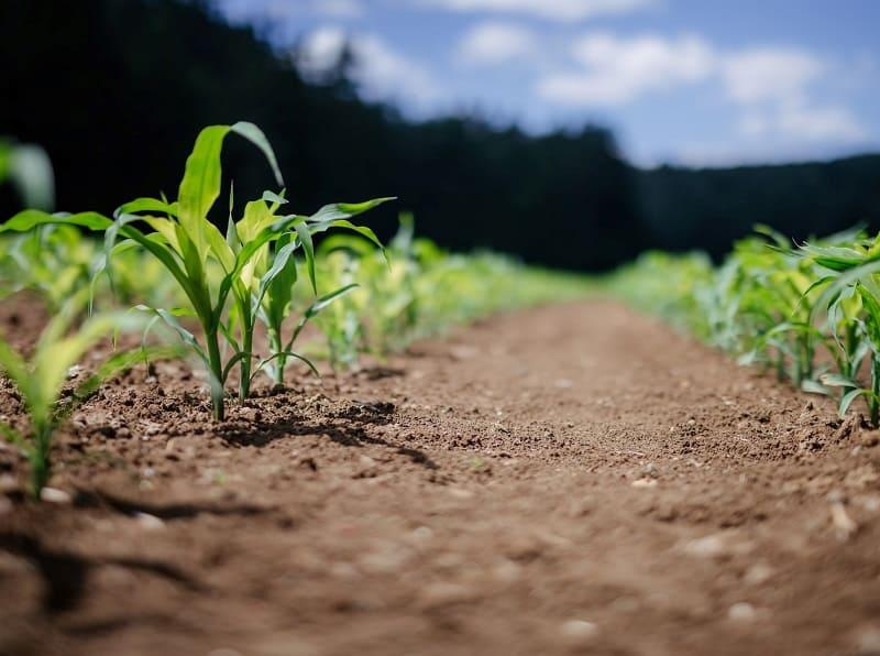 Análisis de cadmio en suelos y fertilizantes agrícolas