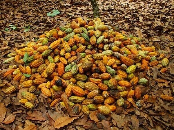 Cadmio en productos del Cacao
