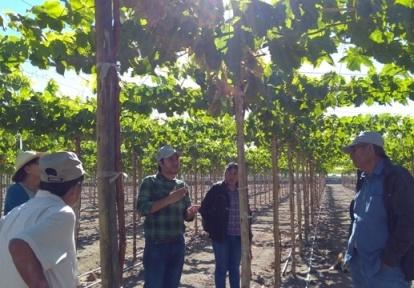 analisis agricolas en Peru