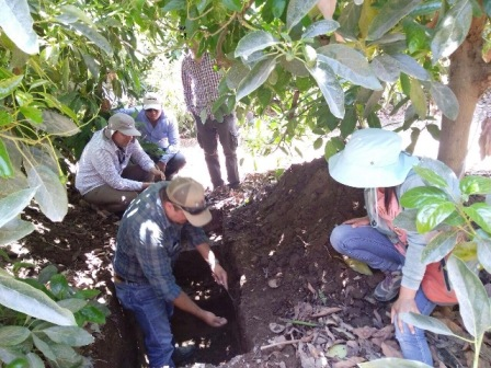Visitas y formación técnica para cultivos agrícolas