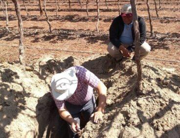 Visita a empresas agroexportadoras de Ica